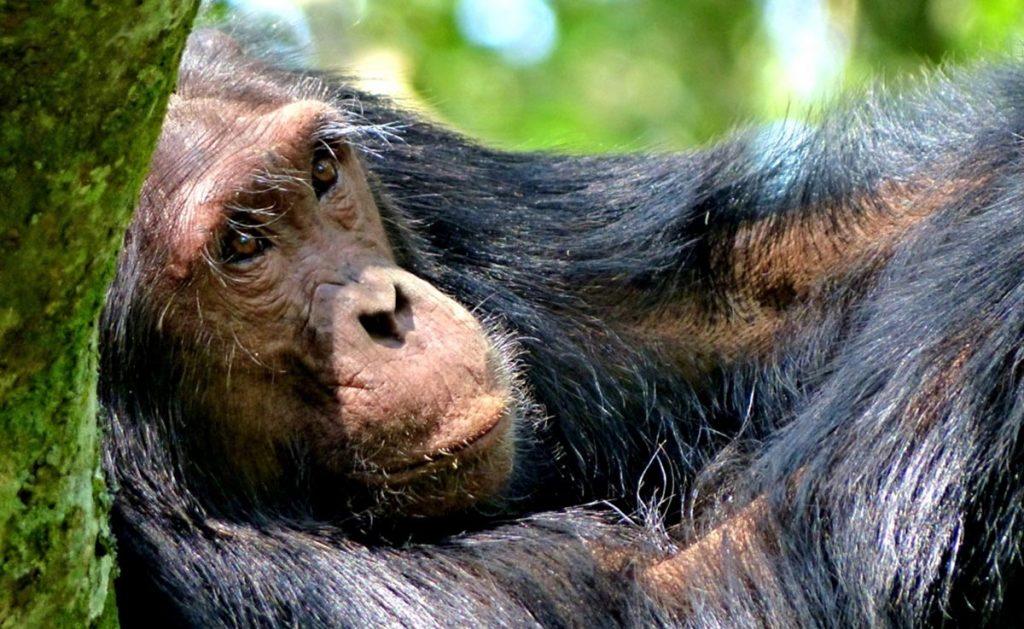 Ultimate Uganda Highlights Safari
