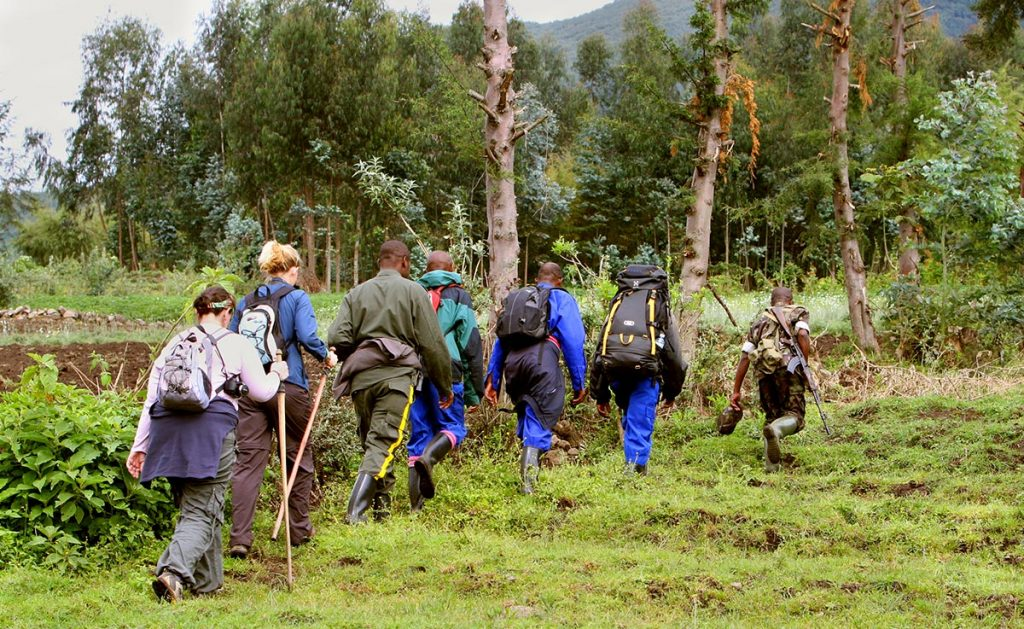 Uganda Gorilla Habituation Experience (HEX)