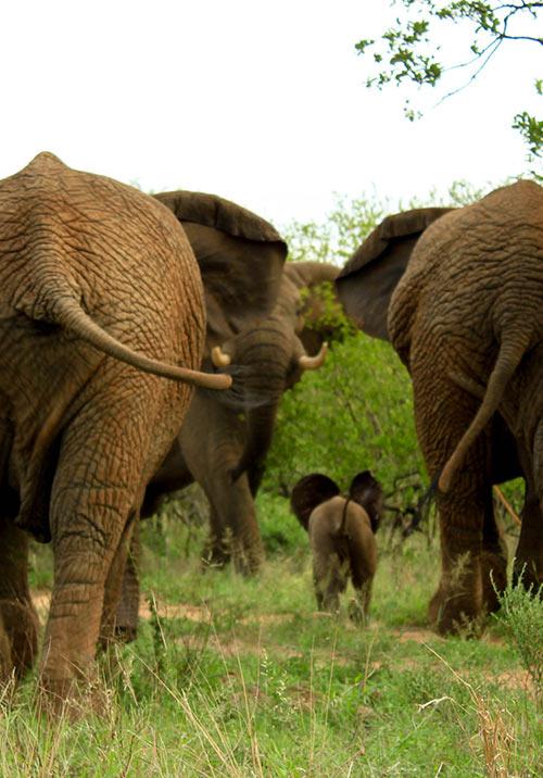 Family Wildlife Safaris