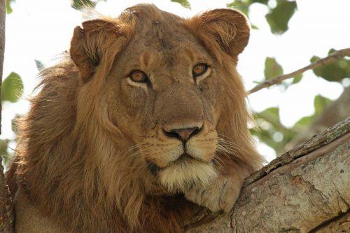 15 Day Uganda Safari Highlights Holiday